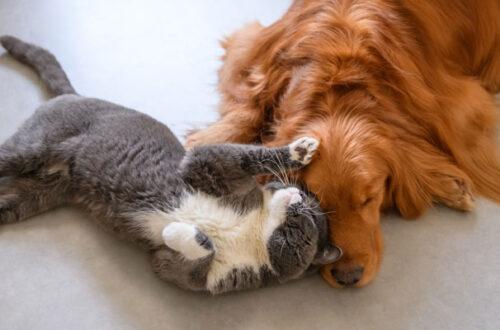 Stop allo Stress: RelaxoPet, una Pet-Spa in casa! thumb