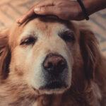 crocchette per cani anzianiii
