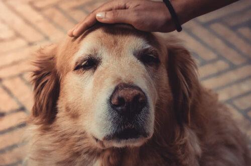 Crocchette per cani anziani: come sceglierle? thumb