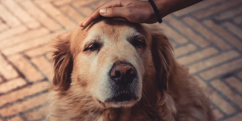 Crocchette per cani anziani: come sceglierle? cover