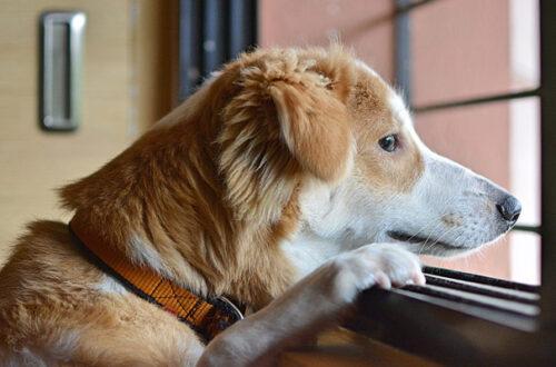 Come abituare il cane a stare da solo? thumb