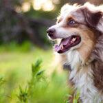 perchè i cani mangiano l'erba